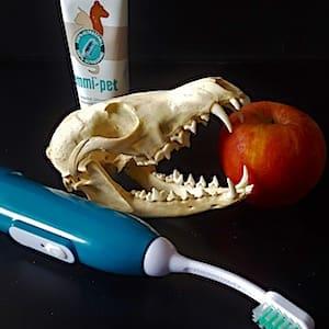 Dentalhygiene-Bild